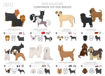 Companion and miniature toy dogs collection isolated on white. Flat style. Different color and country of origin. Vector illustration Ilustración de vector