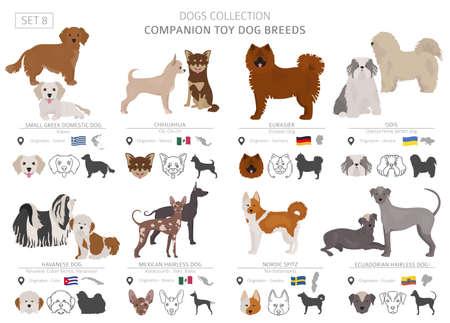 Colección de perros de juguete de compañía y en miniatura aislado en blanco. Estilo plano. Diferente color y país de origen. Ilustración vectorial