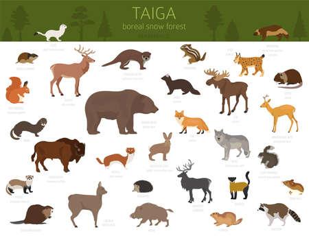 Bioma della taiga, foresta di neve boreale. Mappa del mondo dell'ecosistema terrestre. Progettazione infografica di animali, uccelli, pesci e piante. Illustrazione vettoriale Vettoriali