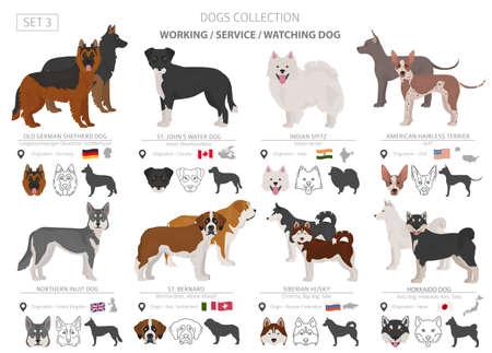 Collection de chiens de travail, de service et de surveillance isolée sur blanc. Style plat. Couleur et pays d'origine différents. Illustration vectorielle Vecteurs