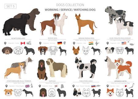 Collection de chiens de travail, de service et de surveillance isolée sur blanc. Style plat. Couleur et pays d'origine différents. Illustration vectorielle