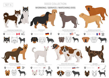 Working, service and watching dogs collection isolated on white. Flat style. Different color and country of origin. Vector illustration  イラスト・ベクター素材