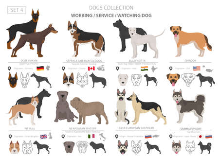 Working, service and watching dogs collection isolated on white. Flat style. Different color and country of origin. Vector illustration Çizim