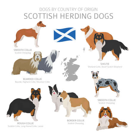 Dogs by country of origin. Scottish dog breeds. Shepherds, hunting, herding, toy, working and service dogs  set.  Vector illustration Vettoriali