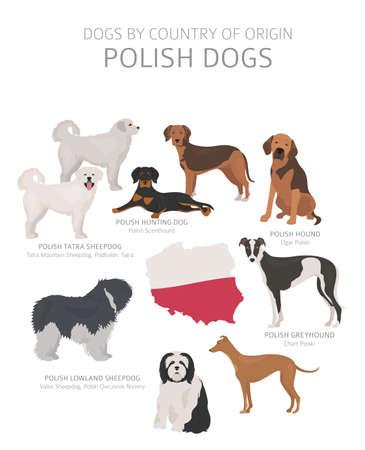 Perros por país de origen. Razas de perros polacos. Perros pastores, cazadores, pastores, de juguete, de trabajo y de servicio. Ilustración vectorial
