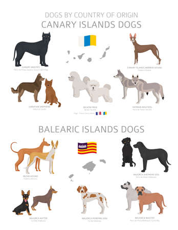 Dogs by country of origin. Canary and Balearic islands dog breeds. Shepherds, hunting, herding, toy, working and service dogs  set.  Vector illustration