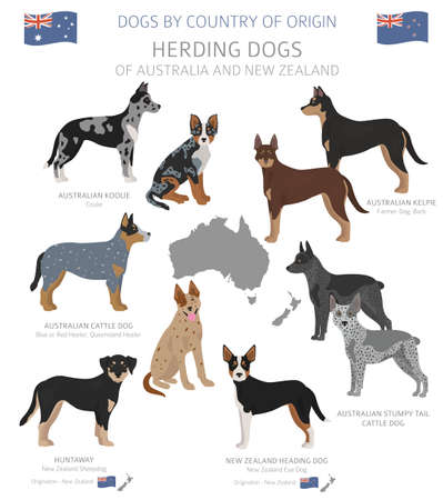 Dogs by country of origin. Australian dog breeds. Shepherds, hunting, herding, toy, working and service dogs  set.  Vector illustration