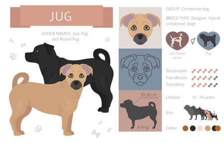 Concepteur, croisement, collection de chiens de mélange hybride isolée sur blanc. Ensemble de cliparts de style plat. Illustration vectorielle