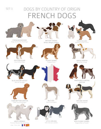 Dogs by country of origin. French dog breeds. Shepherds, hunting, herding, toy, working and service dogs  set.