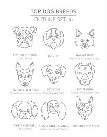 Top dog breeds. Hunting, shepherd and companion dogs set. Pet outline collection. Vector illustration Vector Illustration