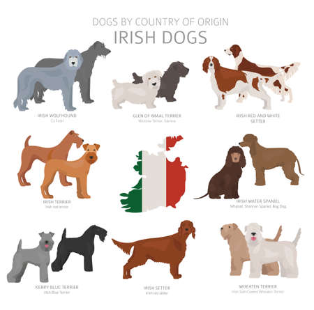 Dogs by country of origin. Irish dog breeds. Shepherds, hunting, herding, toy, working and service dogs  set.  Vector illustration Illustration