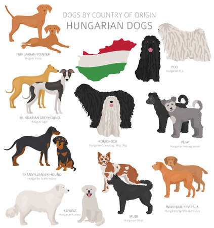 Dogs by country of origin. Hungarian dog breeds. Shepherds, hunting, herding, toy, working and service dogs  set.  Vector illustration 向量圖像