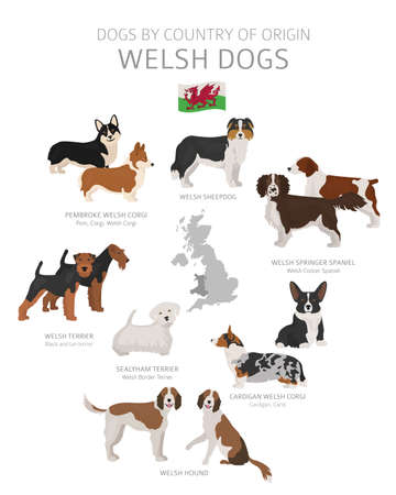 Dogs by country of origin. Welsh dog breeds. Shepherds, hunting, herding, toy, working and service dogs  set.  Vector illustration Stock Vector - 123493393