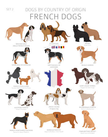 Dogs by country of origin. French dog breeds. Shepherds, hunting, herding, toy, working and service dogs  set.  Vector illustration Illustration