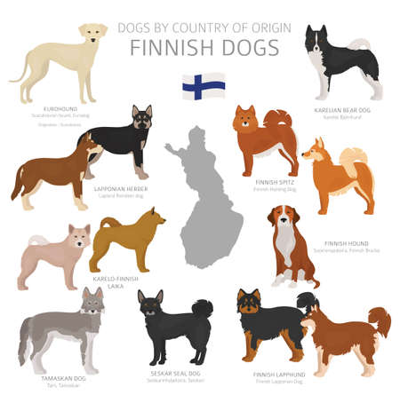 Dogs by country of origin. Finnish dog breeds. Shepherds, hunting, herding, toy, working and service dogs  set.  Vector illustration Illustration