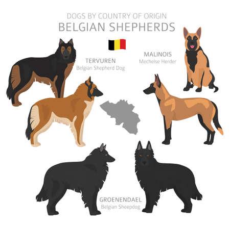 Chiens par pays d'origine. Races de chiens belges. Ensemble de chiens de berger, de chasse, d'élevage, de jouet, de travail et d'assistance. Illustration vectorielle