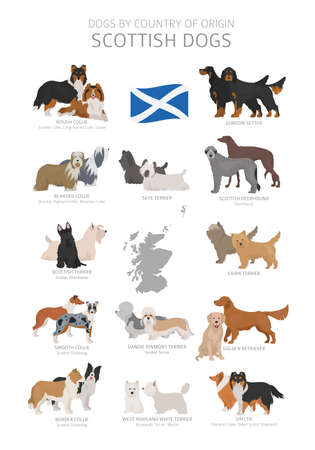 Dogs by country of origin. Scottish dog breeds. Shepherds, hunting, herding, toy, working and service dogs  set.  Vector illustration Illustration