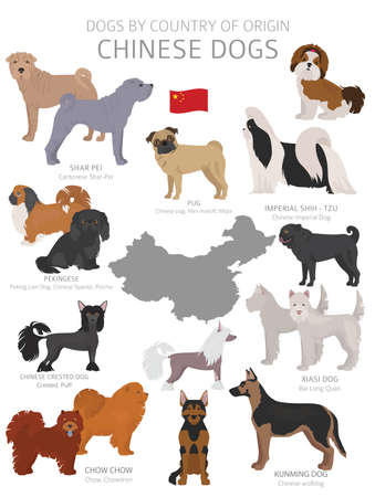 Dogs by country of origin. Chinese dog breeds. Shepherds, hunting, herding, toy, working and service dogs  set.  Vector illustration