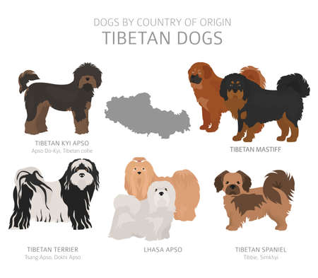 Dogs by country of origin. Tibetan dog breeds. Shepherds, hunting, herding, toy, working and service dogs  set.  Vector illustration