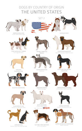 Dogs by country of origin. Dog breeds from the United states of America. Shepherds, hunting, herding, toy, working and service dogs  set.  Vector illustration Vettoriali