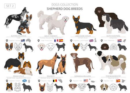 Collection de chiens de berger et de berger isolée sur blanc. Style plat. Couleur et pays d'origine différents. Illustration vectorielle