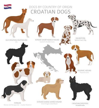 Dogs by country of origin. Croatian dog breeds. Shepherds, hunting, herding, toy, working and service dogs  set.  Vector illustration