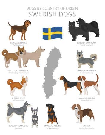 Perros por país de origen. Razas de perros de Suecia. Perros pastores, de caza, de pastoreo, de juguete, de trabajo y de servicio. Ilustración vectorial Ilustración de vector