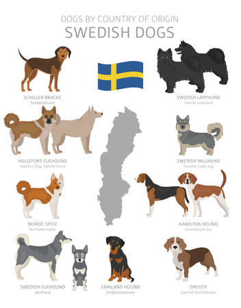 Dogs by country of origin. Sweden dog breeds. Shepherds, hunting, herding, toy, working and service dogs  set.  Vector illustration