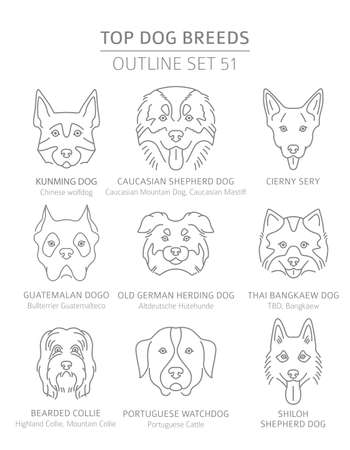Top dog breeds. Hunting, shepherd and companion dogs set. Pet outline collection. Vector illustration Illustration
