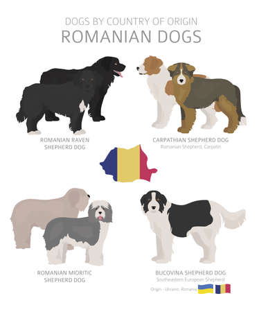 Dogs by country of origin. Romanian dog breeds. Shepherds, hunting, herding, toy, working and service dogs  set.  Vector illustration