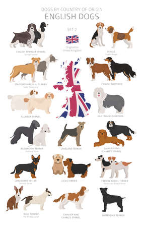 Dogs by country of origin. English dog breeds. Shepherds, hunting, herding, toy, working and service dogs set. Vector illustration