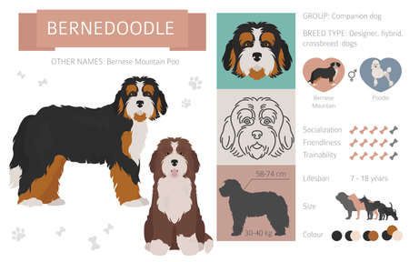 Designer, crossbreed, hybrid mix dogs collection isolated on white. Flat style clip art set. Vector illustration