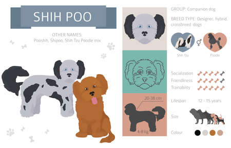 Designer dogs, crossbreed, hybrid mix pooches collection isolated on white. Flat style clipart infographic. Vector illustration