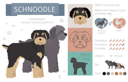 Designer dogs, crossbreed, hybrid mix pooches collection isolated on white. Flat style clipart info graphic. Vector illustration
