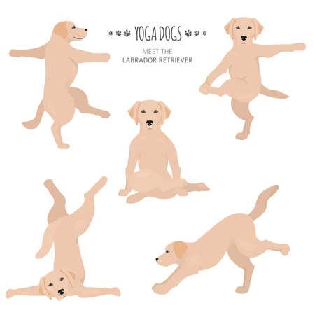 Yoga dogs poses and exercises. Labrador retriever clipart. Vector illustration Stock Vector - 128503169
