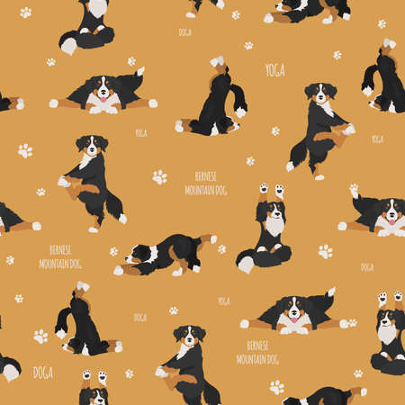 Yoga dogs poses and exercises. Bernese mountain dog seamless pattern. Vector illustration