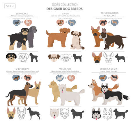 Designer dogs, crossbreed, hybrid mix pooches collection isolated on white. Flat style clipart set. Vector illustration Illustration