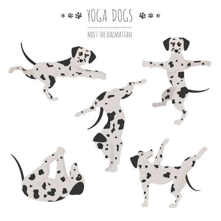 Yoga dogs poses and exercises. Dalmatian clipart. Vector illustration