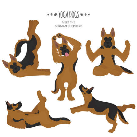 Yoga dogs poses and exercises. German shepherd clipart. Vector illustration