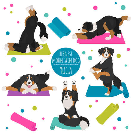 Yoga dogs poses and exercises. Bernese mountain dog clipart. Vector illustration