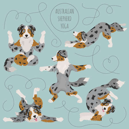 Yoga dogs poses and exercises. Australian shepherd clipart. Vector illustration 向量圖像
