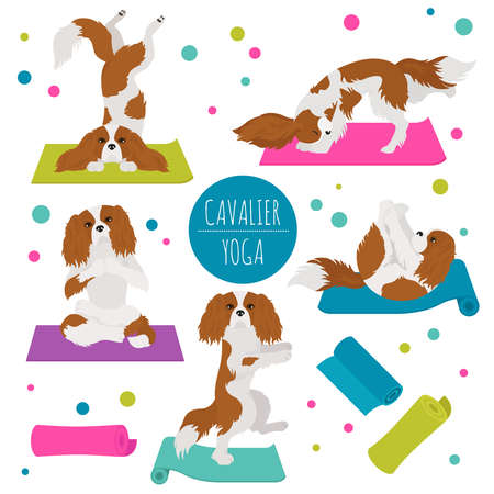 Yoga dogs poses and exercises. Cavalier King Charles spaniel clipart. Vector illustration
