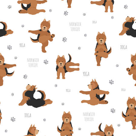 Yoga dogs poses and exercises. Norwich terrier seamless pattern. Vector illustration Stock Vector - 128503202