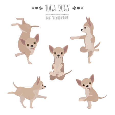 Yoga dogs poses and exercises. Chihuahua clipart. Vector illustration