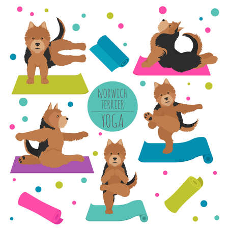Yoga dogs poses and exercises. Norwich terrier clipart. Vector illustration Stock Vector - 128503223