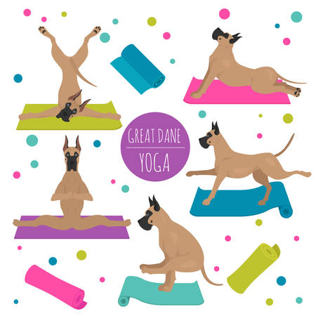 Yoga dogs poses and exercises. Great dane clipart. Vector illustration