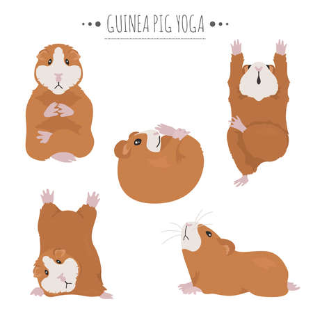 Guinea pig yoga poses and exercises. Cute cartoon clipart set. Vector illustration 矢量图像