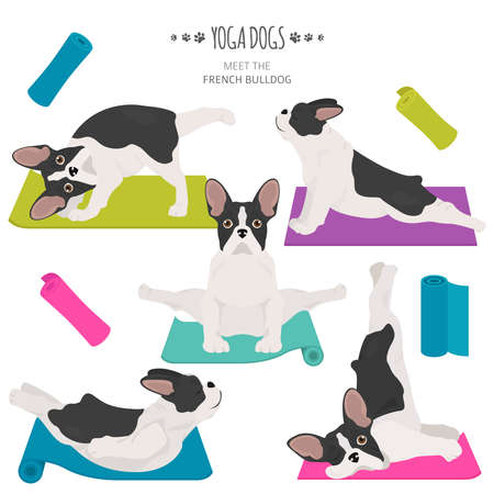 Yoga dogs poses and exercises. French bulldog clipart. Vector illustration
