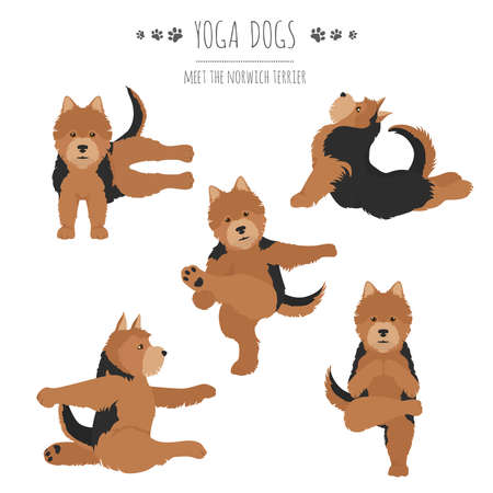 Yoga dogs poses and exercises. Norwich terrier clipart. Vector illustration Stock Vector - 128503253