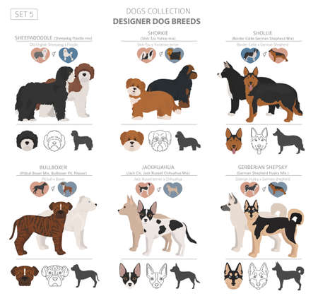 Designer dogs, crossbreed, hybrid mix pooches collection isolated on white. Flat style clipart set. Vector illustration Ilustração